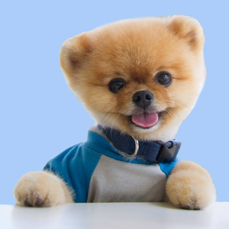 jiff pom pet influencer social media