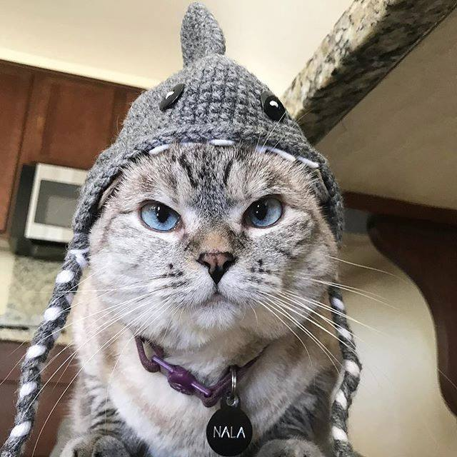 nala pet influencer social media